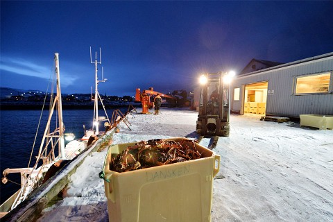 Loading of crab at the wharf in Bugøynes