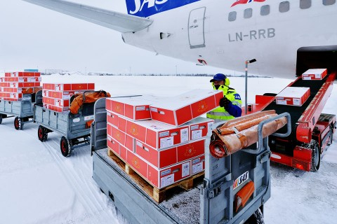 Loading of live king crab for air transport - Kirkenes Airport
