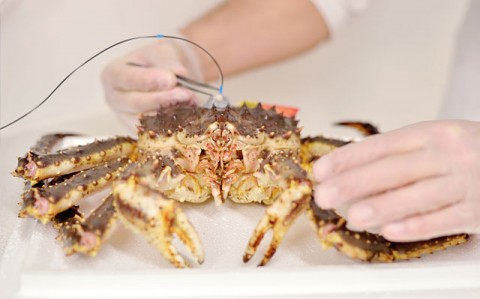 Norway King Crab - R&D